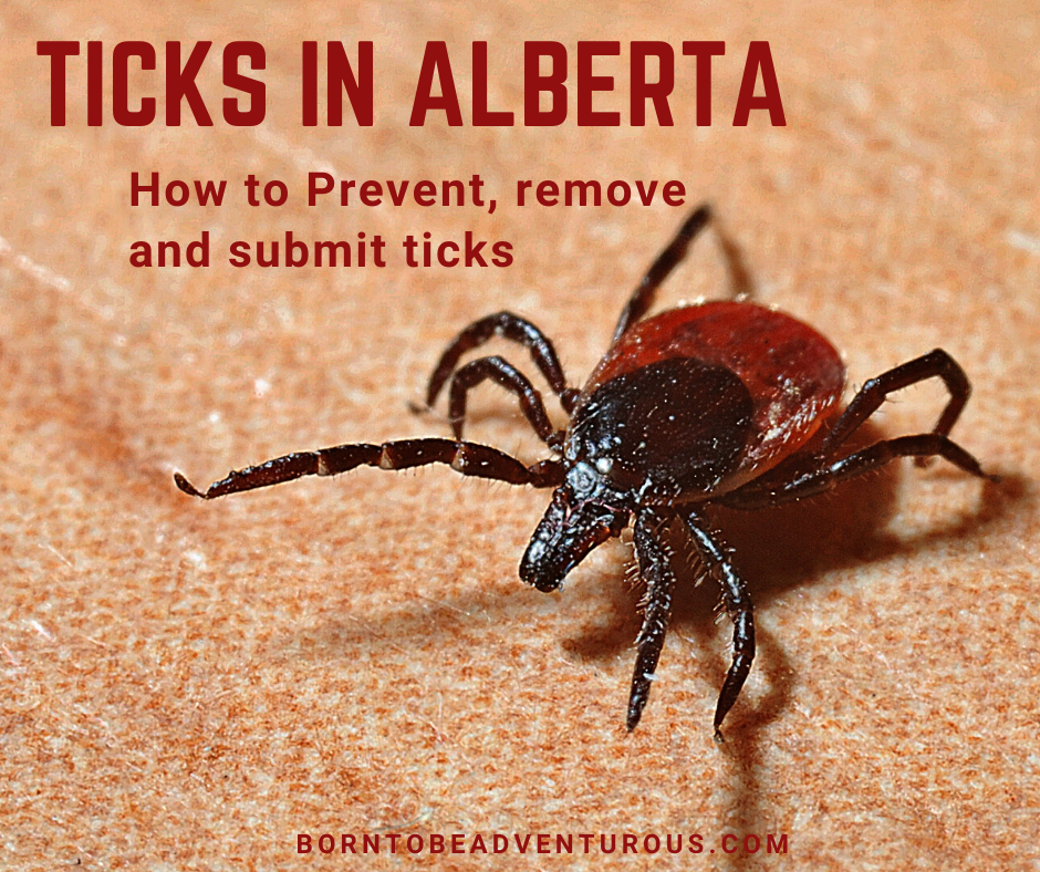 Ticks in Alberta