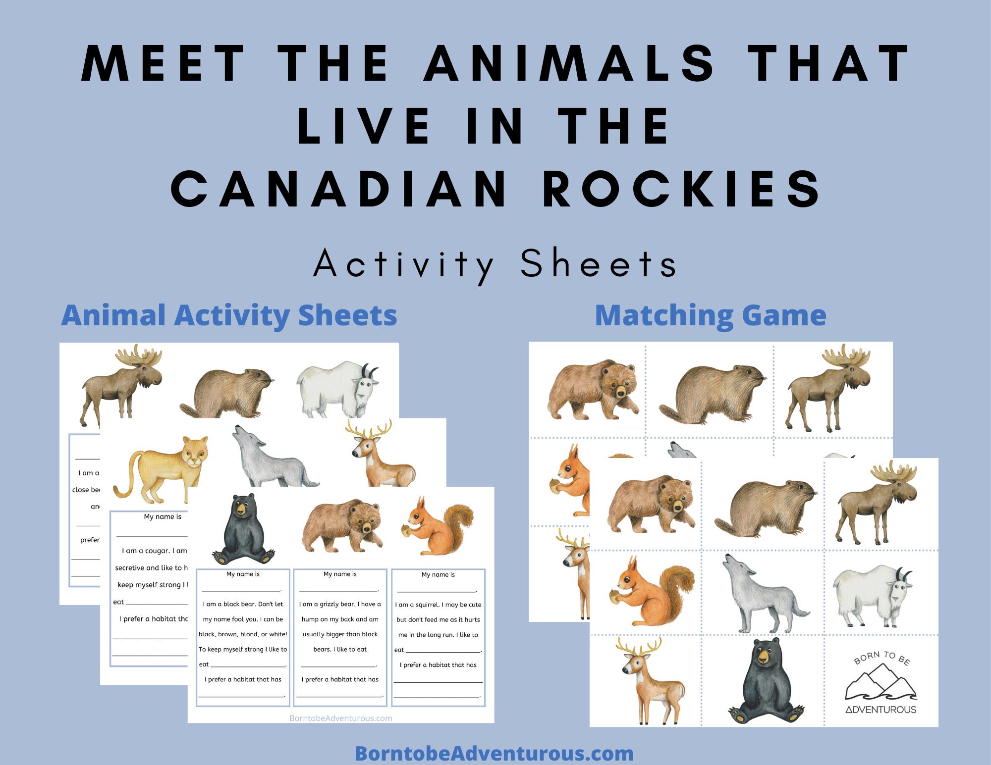 animal activity